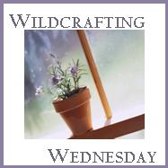 Wildcrafting Wednesday