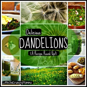 dandelionroundup