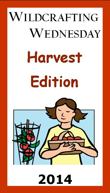 Wildcrafting Wednesday Harvest Edition