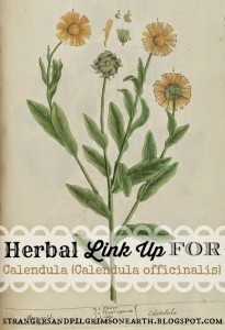 CLIP ART Marigold Calendula Blackwell Link Up