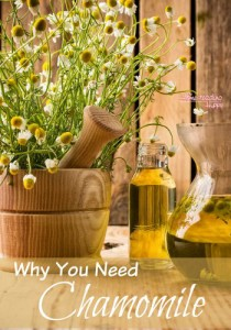 why-you-need-chamomile-small