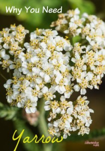 why-you-need-yarrow-small