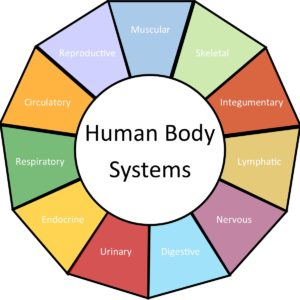 Curriculum Mind Body And Sole
